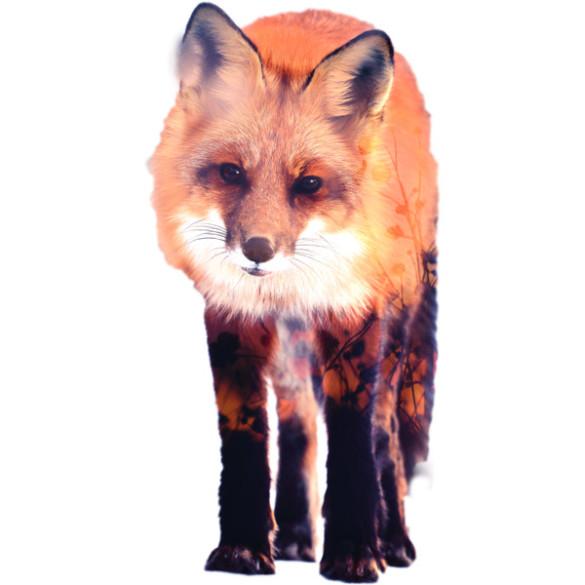 Fox T-shirt Design by Carli design