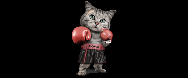 BOXING CAT T-Shirt Design by ADAMLAWLESS image main image