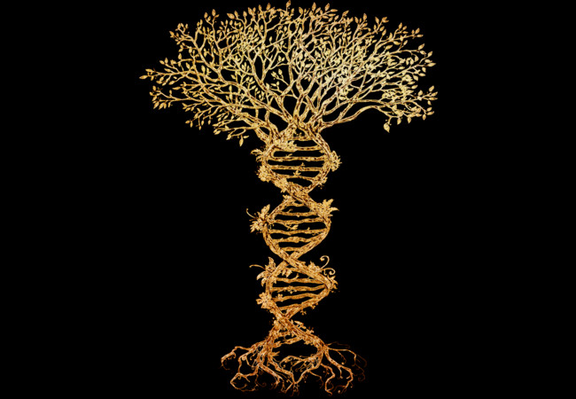 Tree Of Life T Shirt Design By Timea Fancy