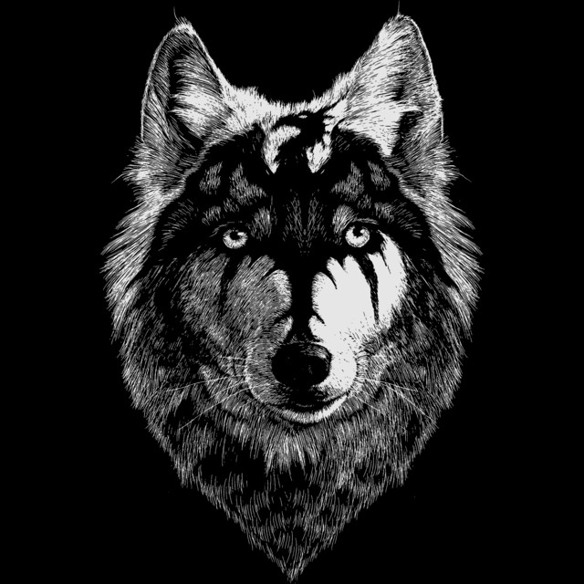 wolf-head-draw-with-the-dragon-t-shirt-design-by-exosam-design