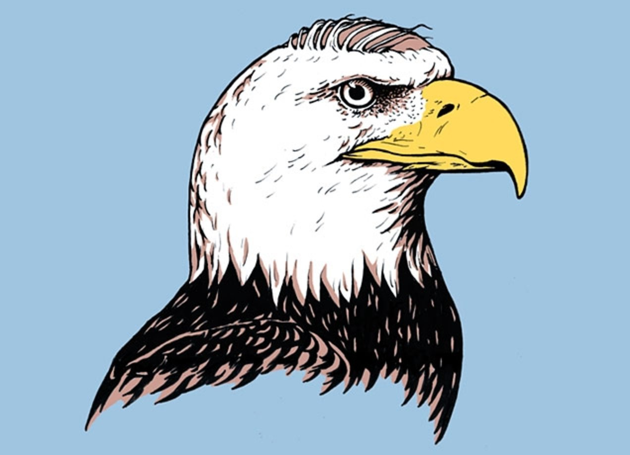 bald eagle design